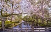 夜燈下的奇幻色彩!日本三大名園——兼六園的秋與冬!