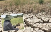 2020年旱季,檳椥省逾5000公頃水稻遭受嚴重旱澇和土壤鹽鹼化災害。(圖源:北平)
