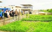 國際友人前來聯合國駐南蘇丹特派團的越南野戰醫院參觀時都很讚歎一片片綠油油的菜園並向越南維和部隊學習無公害蔬菜栽培的技術和經驗。(圖源:成南)