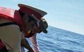 職能力量把海龜放回大海。