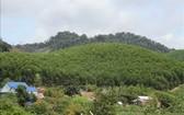 植樹造林為德樂省米德克縣的裸露山體披綠作出貢獻。(圖源:越通社)