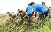 本市年輕人參加改善第十二郡協成坊陳光基涌環境。