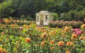 遊客可以參觀英國白金漢宮。