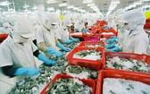 圖為黑虎蝦粗加工工段。