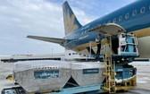 首批 10 噸荔枝空運至日本