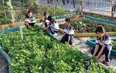 范雄學校少先隊隊員在打理「幫助同學的菜園」。