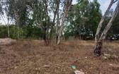 巴地-頭頓省5歲女童被性侵殺害現場。