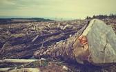 最新數據顯示,5月份亞馬遜雨林地區的森林砍伐量較去年同期猛增67%。(示意圖源:Pixabay)