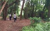 舊邑文化公園項目成為荒地一瞥。