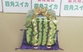 日本方形西瓜上市