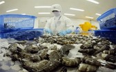 蝦類粗加工。(圖源:秋莊)