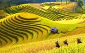 越南正成為國內外遊客的選擇。