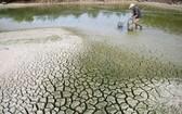 越南是受氣候變化影響最嚴重的國家之一。(圖源:莊陳)