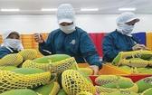 越南芒果出口多國市場。(圖源:VOV)