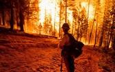 一名消防員在美國加利福尼亞州昆西附近的迪克西火災控制區內監測火災。(圖源:互聯網)