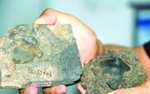 中國首次發現 2.9 億年前瓣齒鯊化石