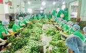 圖為前江省富貴勞務貿易農業合作社員工在分類蔬果。(圖源:970號工作組)