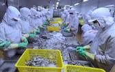 黑虎蝦粗加工工段。(圖源:工商部)