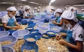 平福省腰果與農產食品加工公司的生產線一瞥。(圖源:越通社)