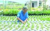 沙瀝市春花種植面積大幅減少