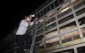 職能力量嚴查豬隻運輸車。