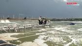 Bạc Liêu: 5.300ha tôm chết do thời tiết cực đoan