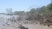Xuất hiện ba đoạn sạt lở nguy hiểm bờ biển Tây - Cà Mau