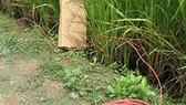 Cà Mau: Bẫy chuột bằng điện, một người tử vong