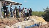 Phát hiện cá ông hàng chục tấn chết trôi dạt vào bờ biển Bạc Liêu