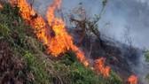 Cụ bà 83 tuổi chết thảm sau khi đốt đám sậy gần nhà