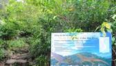 Trên cụm đảo Hòn Khoai có nhiều nguồn gen sinh vật quý hiếm