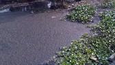 Kiểm tra một công ty về dấu hiệu xả thải gây ô nhiễm kênh rạch