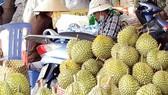 Bumper crop, durian price in Dak Lak province hits record