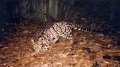 VEA, Four Paws work to save wildlife animals