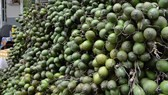 Farmer delighted as fresh betel-nut surges