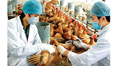 Avian influenza likely to reoccur in Vietnam