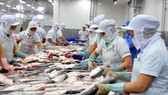 Tra fish processed for export (Photo: VNA)