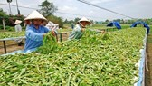 Vietnam cooperates with South Korea to develop  herbal potential