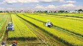 Long An to embark on smart agriculture-industry urban project