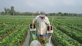 Farmers in Mekong delta earn more thanks to agricultural restructuring