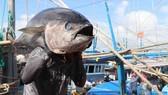 International cooperation key to promoting Vietnam's tuna brand