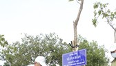 A city leader is watering tree (Photo: SGGP)