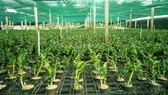 A greenhouse at the Hi-tech Agricultural Park in HCM City's Cu Chi District. — VNS File Photo