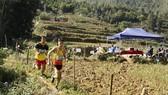 The Vietnam Mountain Marathon 2020 takes place in Sa Pa township (Photo: baolaocai.vn)