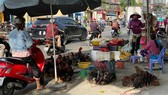 Chickens are illegally sold in a street in HCMC (Photo: SGGP)