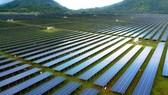 A solar power plant of the Sao Mai group (Photo: SGGP)