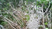 The northern region is predicted to see frost