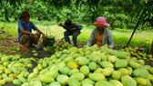 EU to strictly inspect Vietnamese agricultural products in September