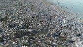 Massive fishes die in upstream Sai Gon River