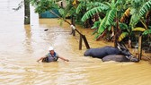 Floodwaters isolate over 10,000 houses in Central region